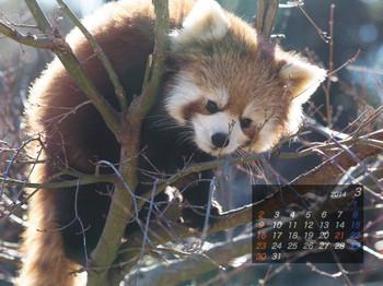Panda1403_rf