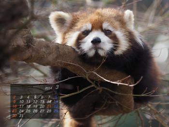Panda1403_yf
