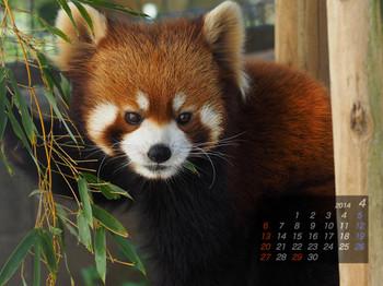 Panda1404_10