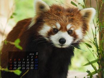 Panda1405_fn