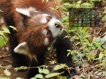 Panda1405_gt