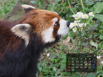 Panda1406_yf