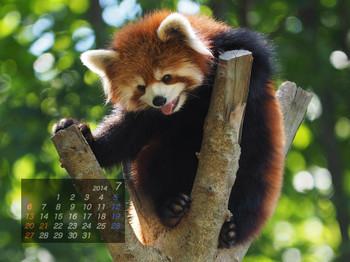 Panda1407_ee
