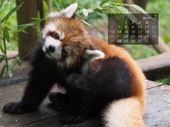 Panda1407_yy