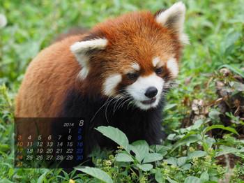 Panda1408_mt