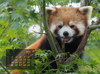 Panda1408_rf