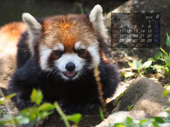 Panda1408_yf