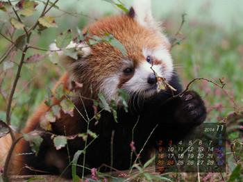 Panda1411_tt
