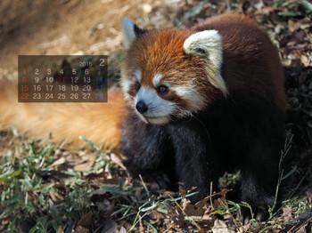 Panda1502_ee
