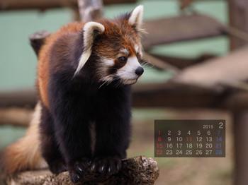 Panda1502_yy