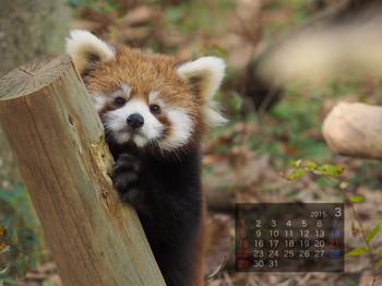 Panda1503_tt