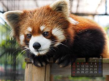 Panda1505_mt