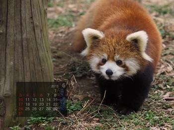 Panda1505_tt