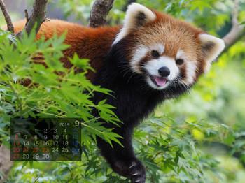Panda1509_rf