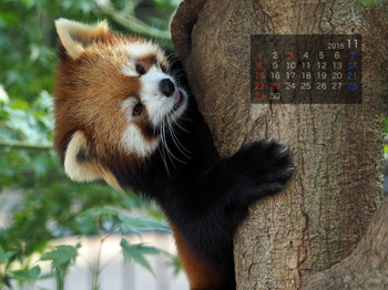Panda1511_rf