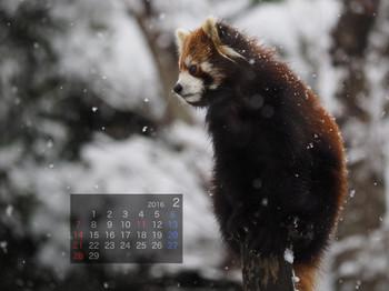 Panda1602_gt