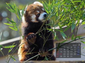 Panda1603_kt