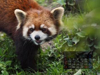 Panda1604_yf