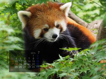 Panda1607_rf