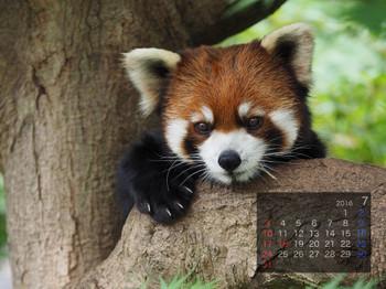 Panda1607_yf