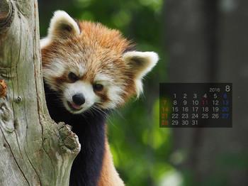 Panda1608_yi