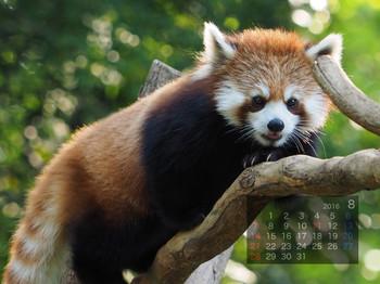Panda1608_yu