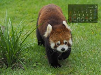 Panda1609_sy