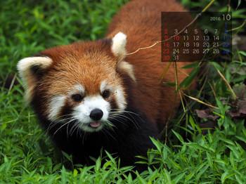 Panda1610_rf