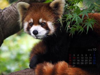Panda1610_yf