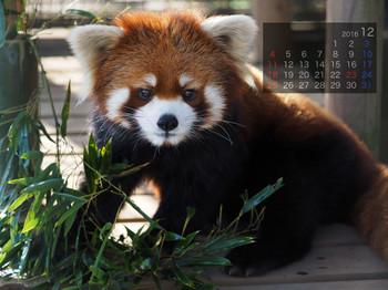 Panda1612_mt