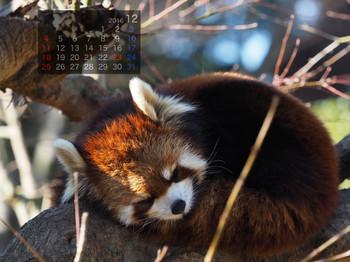 Panda1612_yf