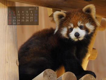 Panda1701sakuya
