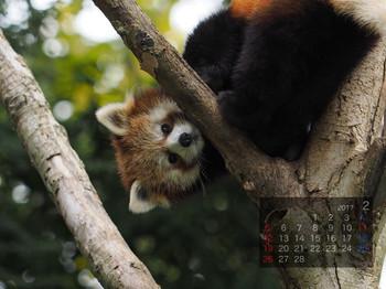 Panda1702yui