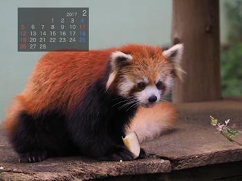Panda1702yuu