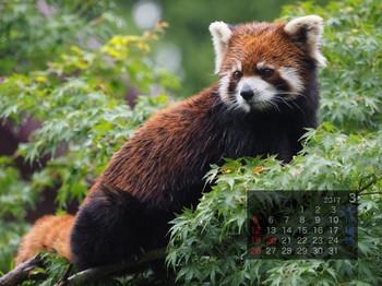 Panda1703yuufa