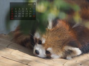 Panda1704harumaki