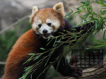 Panda1705kanoko
