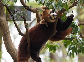 Panda1705mametarou