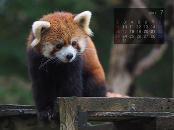 Panda1707meita