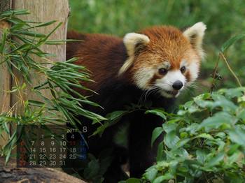 Panda1708meita