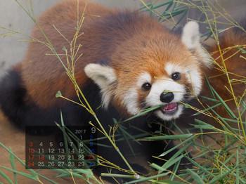 Panda1709harumaki
