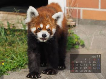 Panda1711kokoro