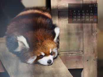 Panda1712himawari