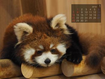 Panda1801meisyan