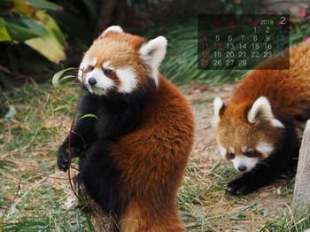 Panda1802jazmelody
