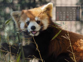 Panda1803harumaki