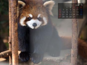 Panda1805himawari