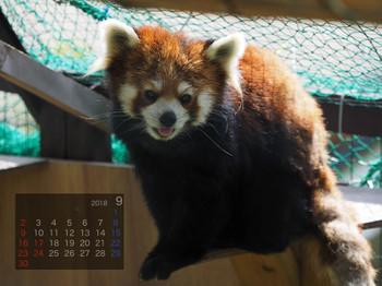 Panda1809yui