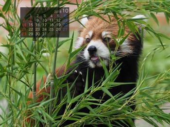 Panda1810genta