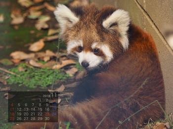 Panda1811b